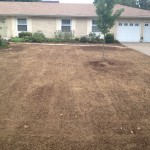 Killed Out Brown Lawn