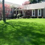 Spring Lawn