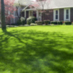 Early Spring Lawn